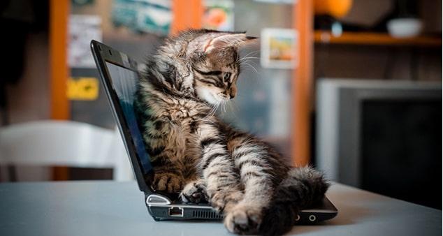 Ноутбук и домашние животные